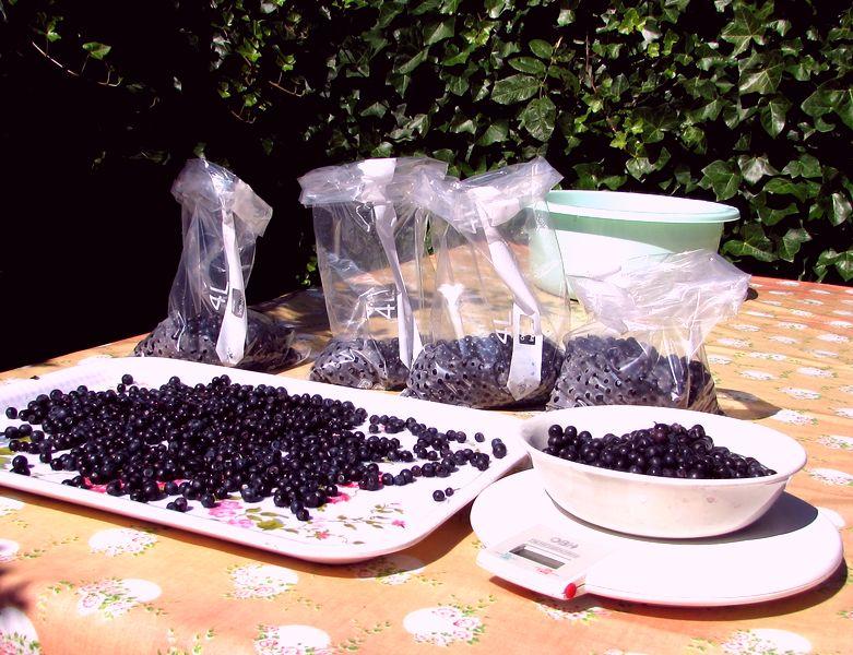 blåbær på bordet